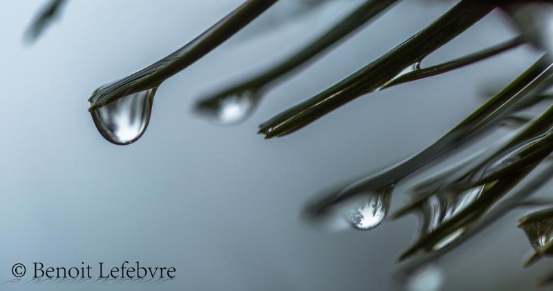 Sortir sa camera dans la pluie n'est pas recommandé mais parfois ça peut valoir la peine.
