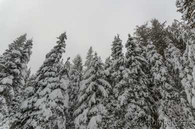 SnowForest01