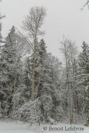 SnowForest02