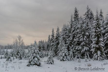 SnowForest03