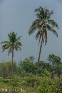 ChiangMaiForest02