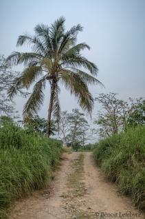palmTreeRoad