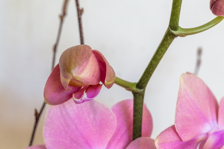 orchidees08